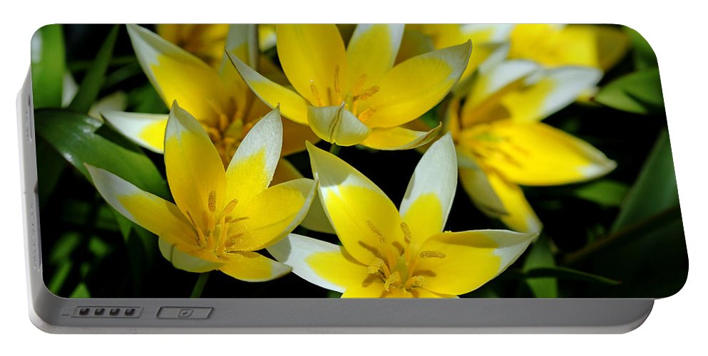 Tulips Portable Battery Charger featuring the photograph Fried Eggs by Debbie Oppermann