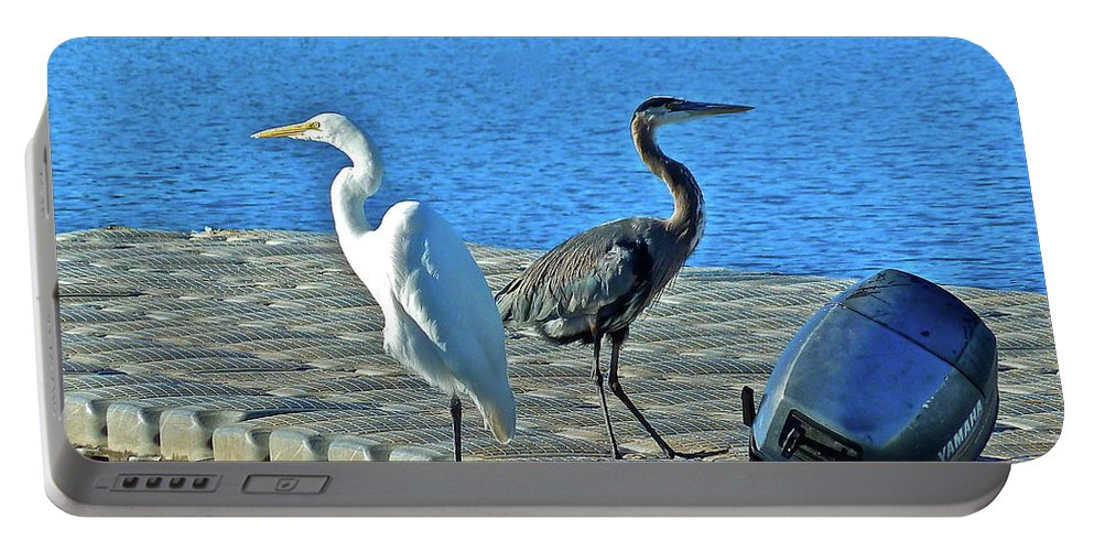 Birds Portable Battery Charger featuring the photograph Friend Or Foe by Diana Hatcher