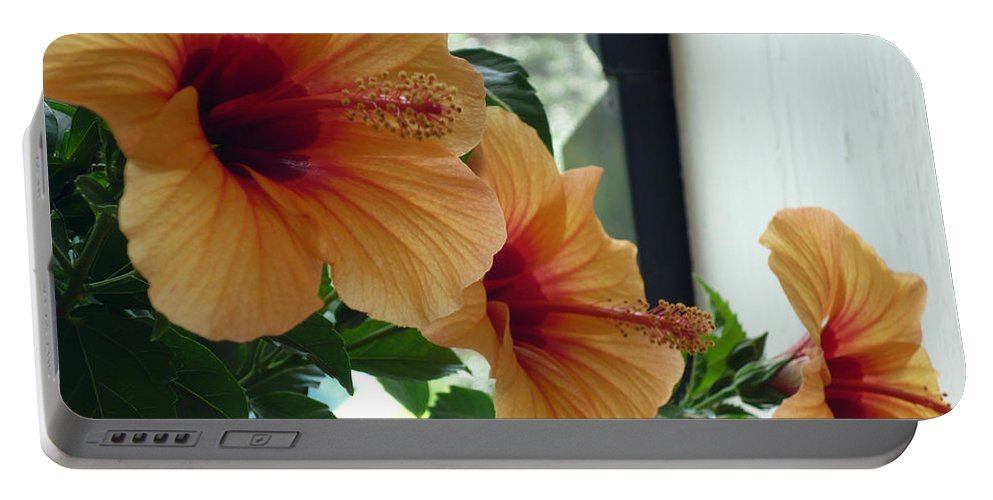 Photography Flower Floral Bloom Hibiscus Peach Portable Battery Charger featuring the photograph Friends for a day by Karin Dawn Kelshall- Best
