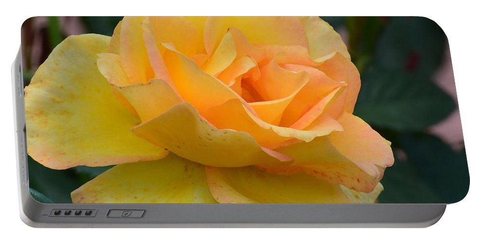 Friendship Rose Portable Battery Charger featuring the photograph Friendship Rose by Maria Urso