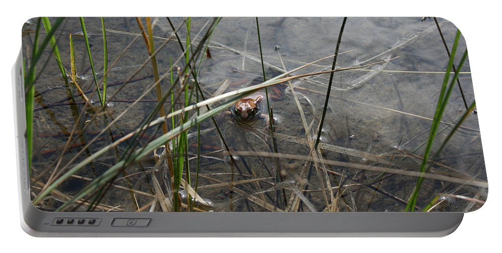 Frog Water Mother Nature Wild Reptile Eyes Lake Marsh Portable Battery Charger featuring the photograph Frog Home by Andrea Lawrence