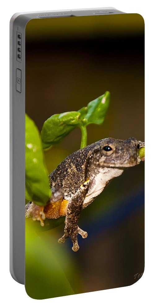 Frog Portable Battery Charger featuring the photograph Frogs Life by Terry Anderson