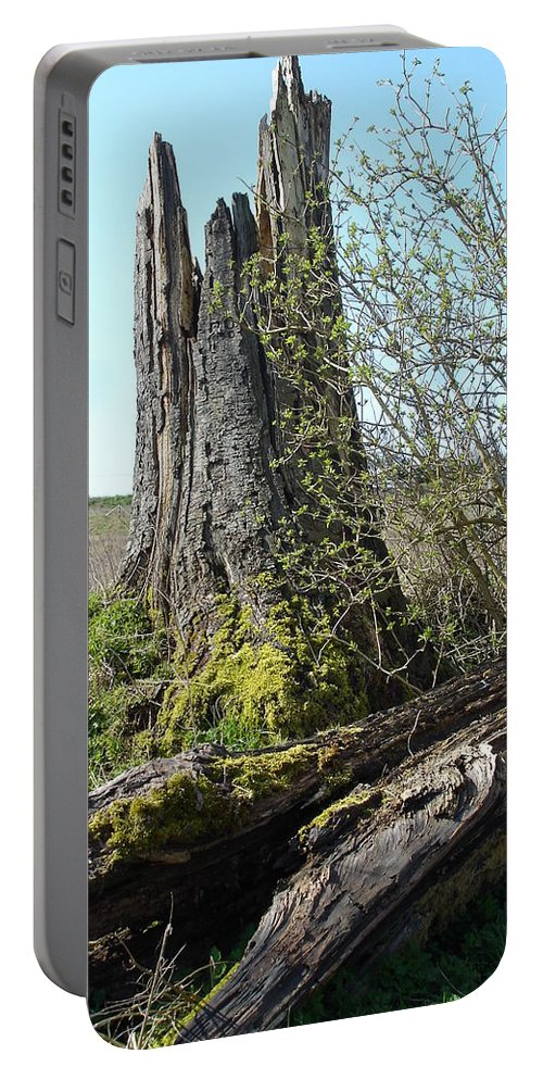Tree Portable Battery Charger featuring the photograph From Old Springs New by Susan Baker