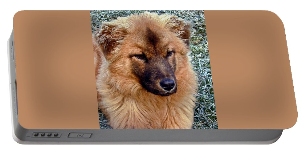 Dog Portable Battery Charger featuring the photograph Frosty Dog by Douglas Barnett