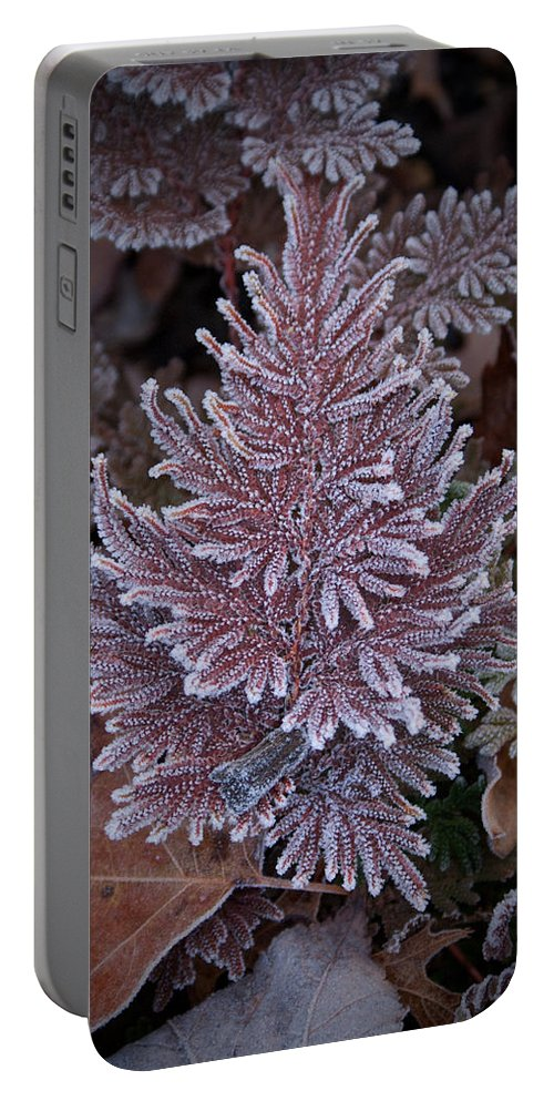 Fern Portable Battery Charger featuring the photograph Frosty Fern Christmas by Douglas Barnett