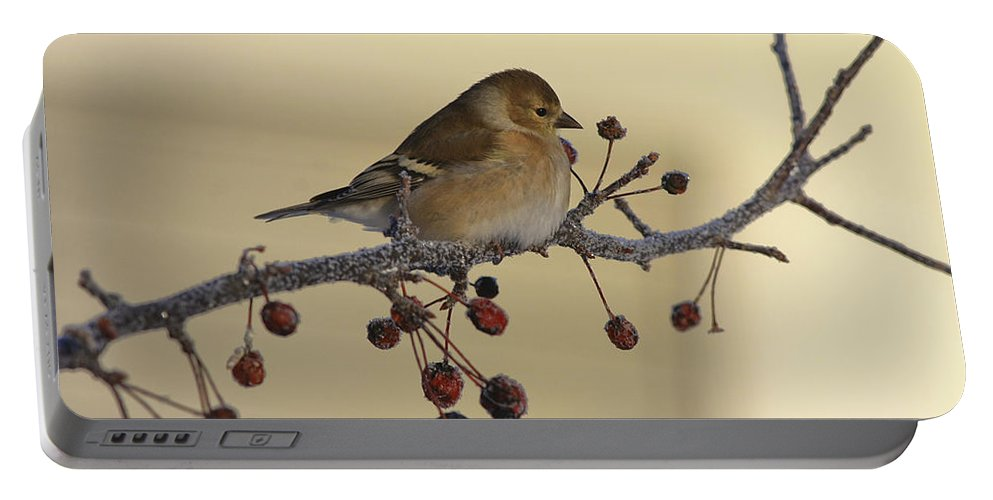 Finch Portable Battery Charger featuring the photograph Frosty Perch by Deborah Benoit