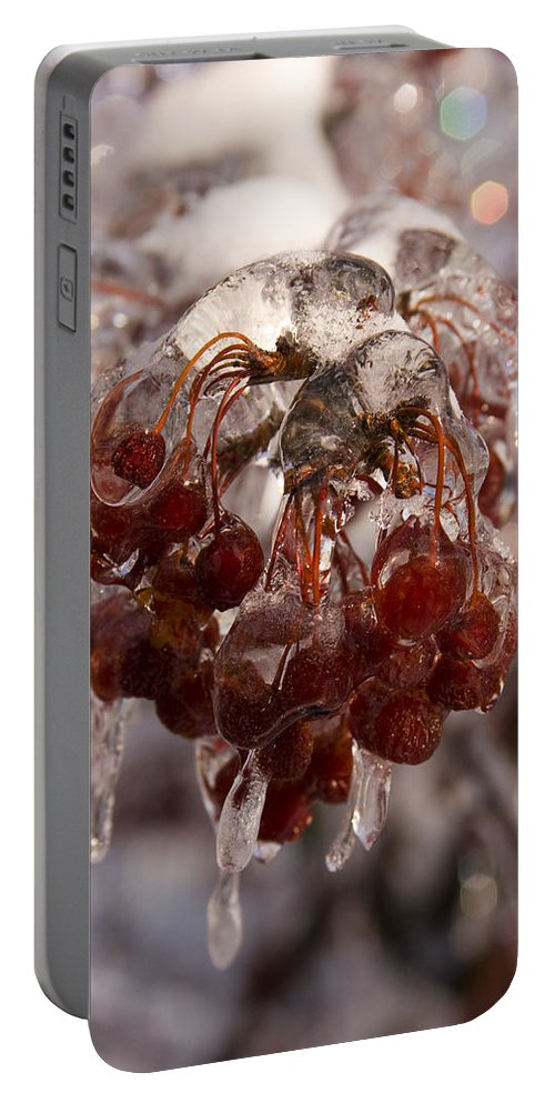 Berry Berries Red Frozen Ice Icy Snow White Spark Tree Winter Storm Glare Sun Reflection Portable Battery Charger featuring the photograph Frozen Berries by Andrei Shliakhau