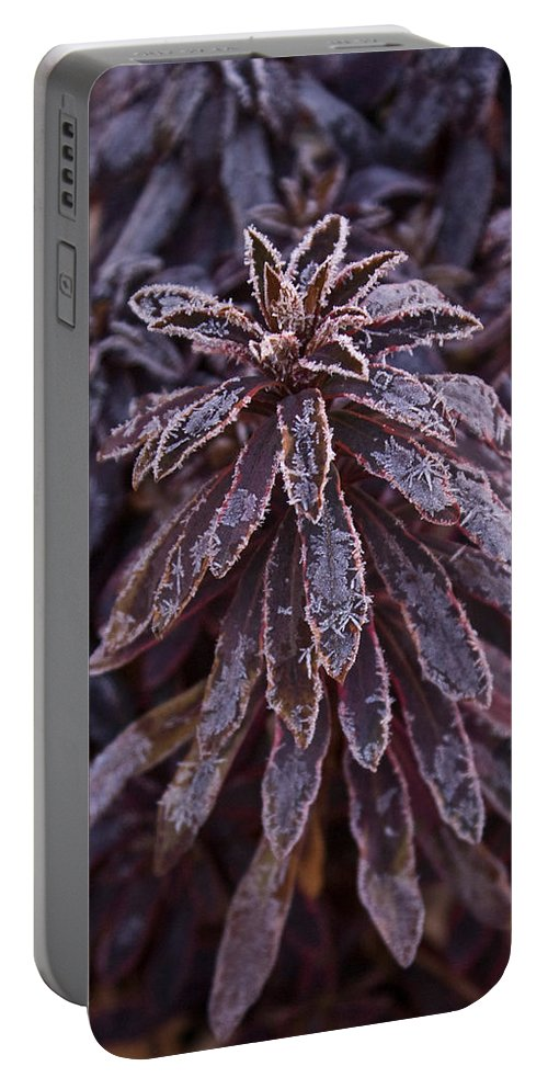 Christmas Portable Battery Charger featuring the photograph Frozen Christmas by Douglas Barnett