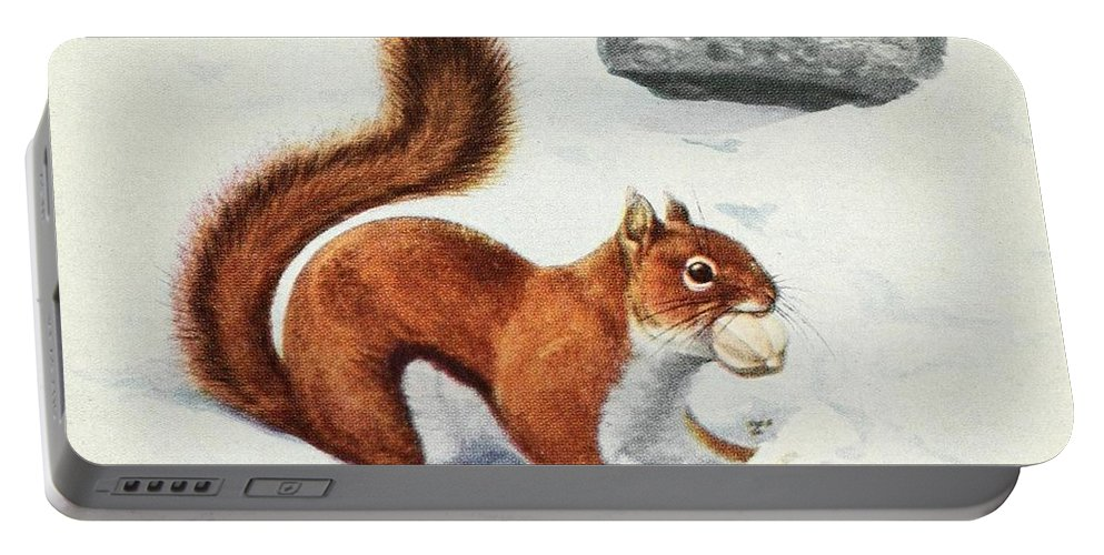 Fuertes Portable Battery Charger featuring the painting Fuertes, Louis Agassiz 1874-1927 - Burgess Animal Book For Children 1920 Red Squirrel by Louis Agassiz Fuertes