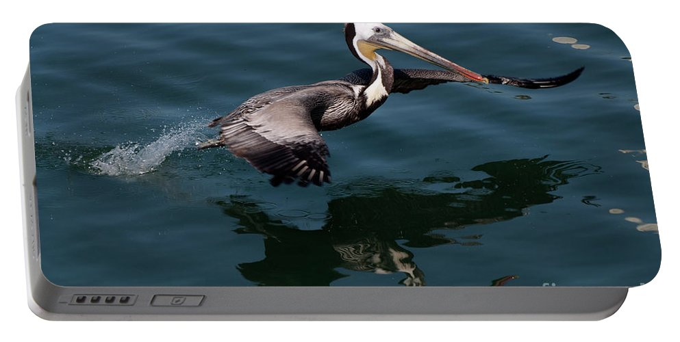 Birds Portable Battery Charger featuring the photograph Funky Wings by Rod Wiens