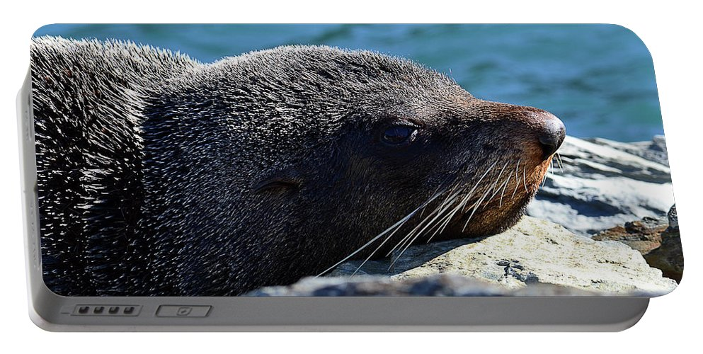 Fur Seal Portable Battery Charger featuring the photograph Fur Seal by Matias Dandrea