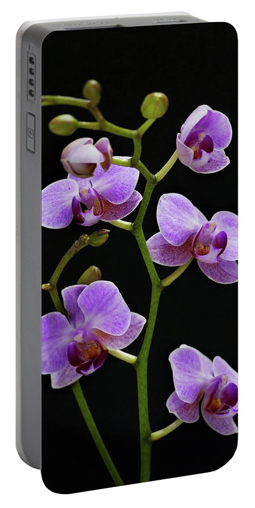 Flowers Portable Battery Charger featuring the photograph Fuschia by Jeff Greene
