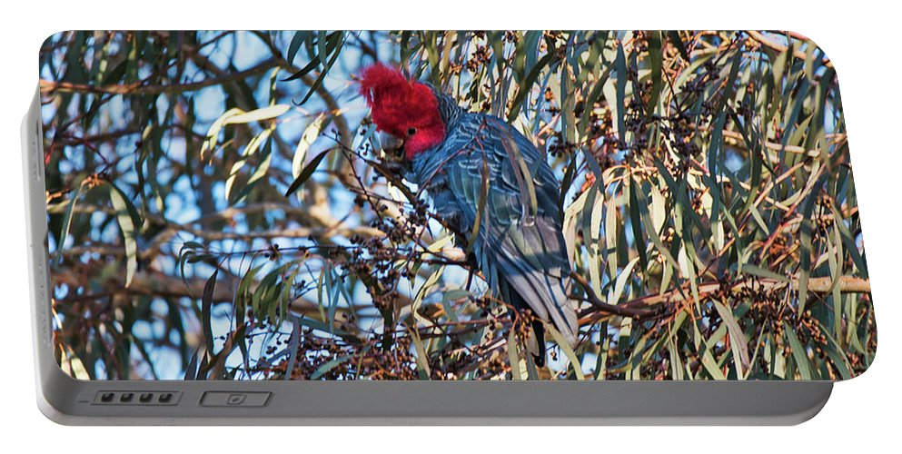 Cockatoo Portable Battery Charger featuring the photograph Gang Gang Cockatoo - Canberra - Australia by Steven Ralser