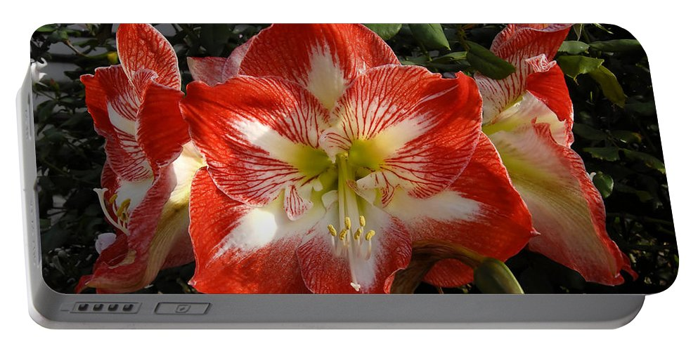Garden Portable Battery Charger featuring the photograph Garden Flowers by David Lee Thompson