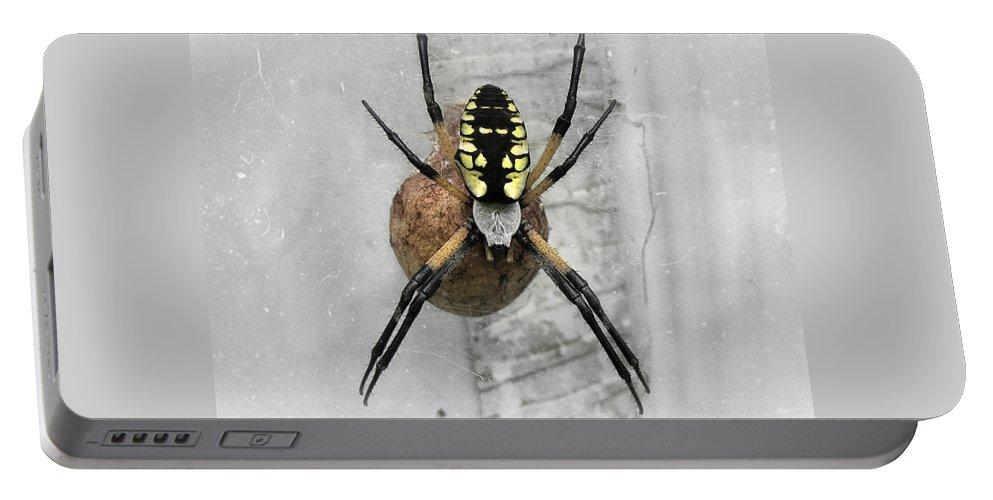 Spider Portable Battery Charger featuring the photograph Garden Spider by Amber Flowers