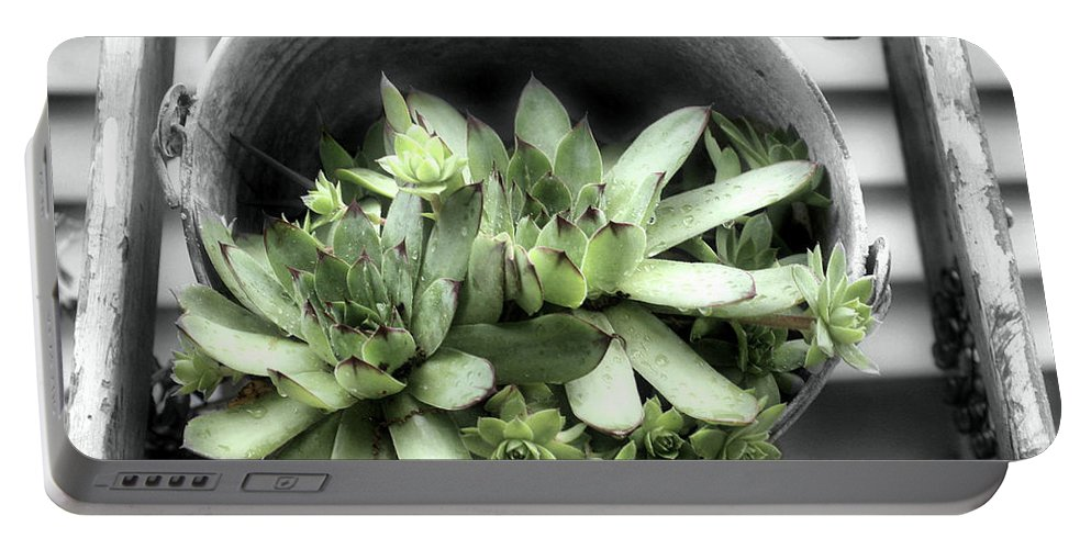 Succulents Portable Battery Charger featuring the photograph Garden Succulents Partial Color by Smilin Eyes Treasures