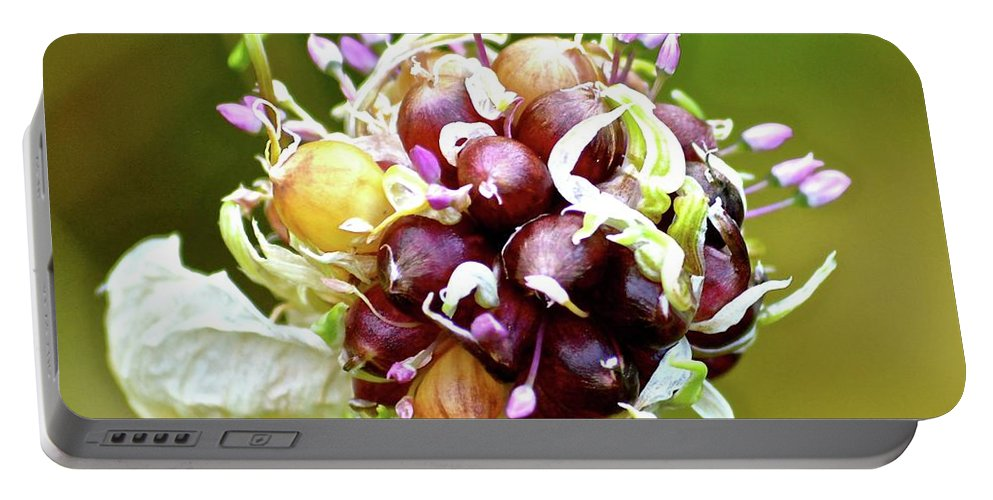 Garlic Portable Battery Charger featuring the photograph Garlic Top by Robin Woolley