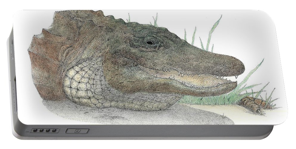 Gator Portable Battery Charger featuring the drawing Gator by David Weaver