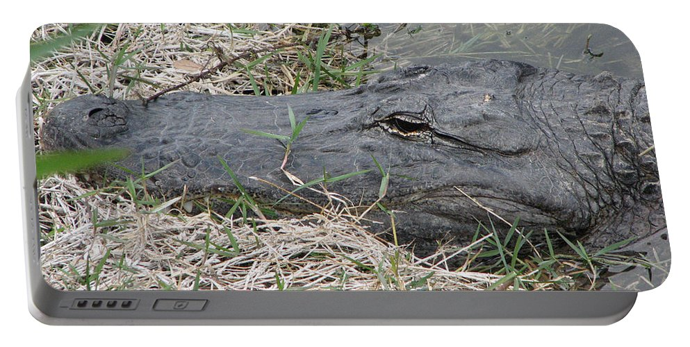 Alligator Portable Battery Charger featuring the photograph Gator by Stacey May