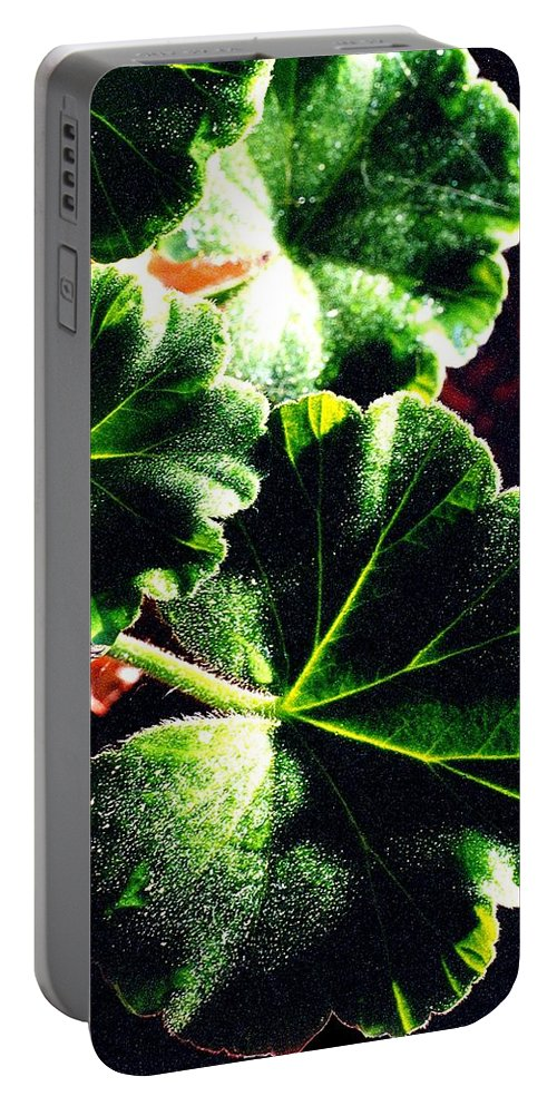 Geraniums Portable Battery Charger featuring the photograph Geranium Leaves by Nancy Mueller