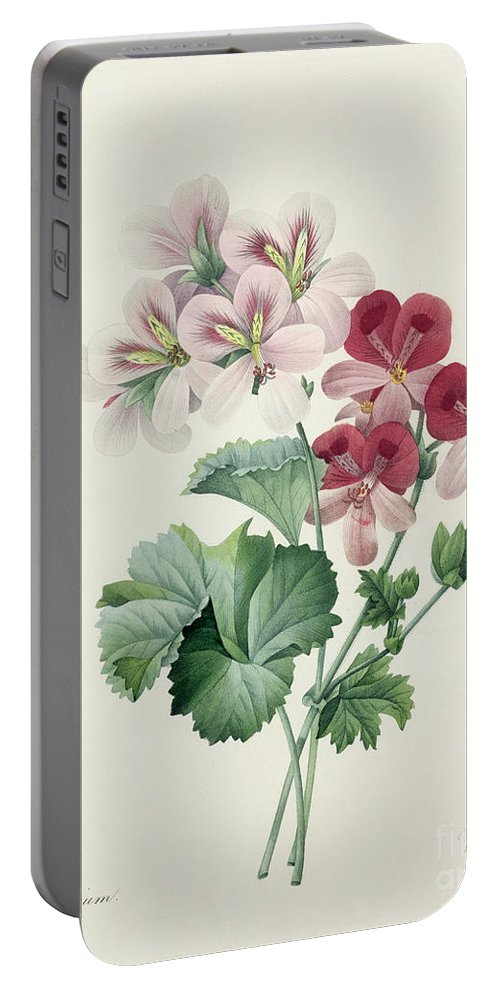 Geranium Portable Battery Charger featuring the drawing Geranium Variety by Pierre Joseph Redoute