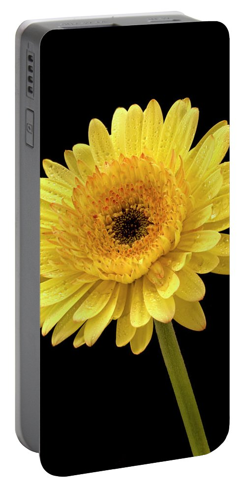 Jean Noren Portable Battery Charger featuring the photograph Gerbera Portrait by Jean Noren