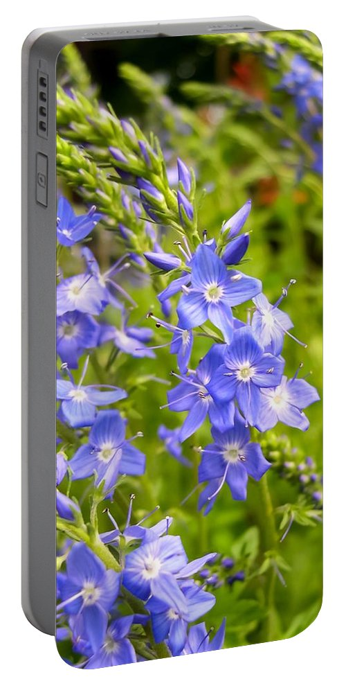 Germander Speedwell Portable Battery Charger featuring the photograph Germander Speedwell by Cynthia Woods