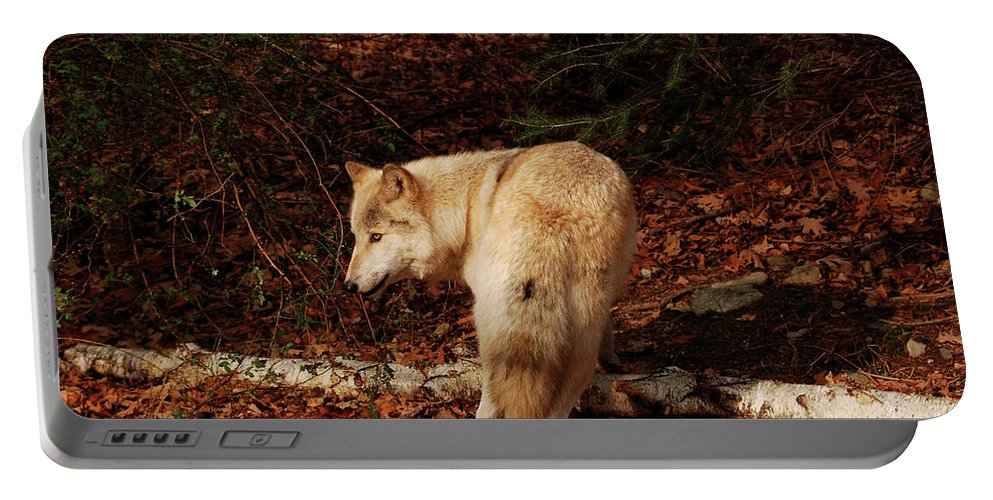 Wolf Portable Battery Charger featuring the photograph Get Back It's My Stick by Lori Tambakis