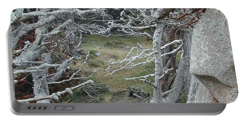 Lichens Portable Battery Charger featuring the photograph Ghost Trees by Douglas Barnett