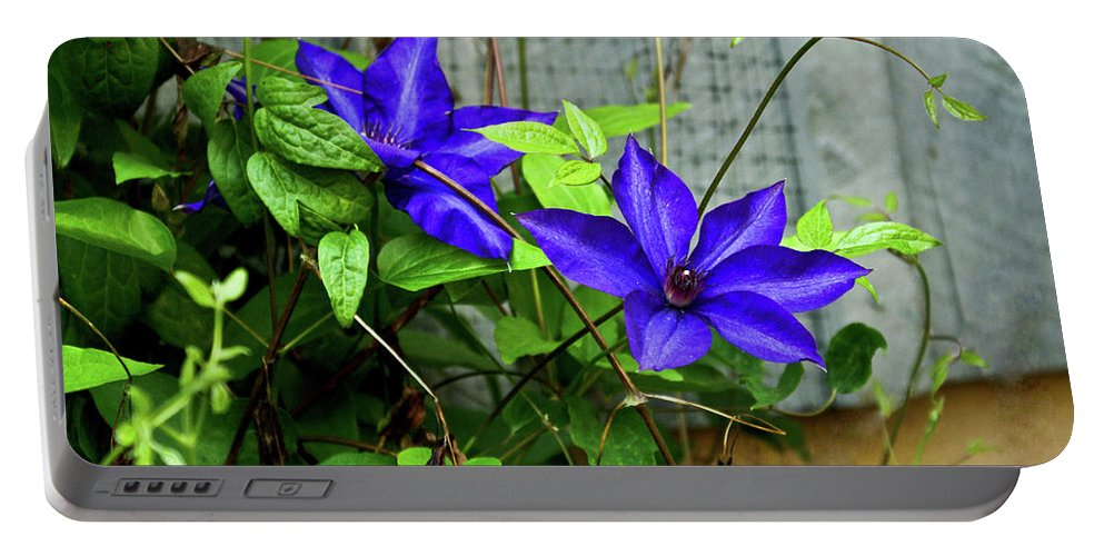 Clematis Portable Battery Charger featuring the photograph Giant Blue Clematis by Douglas Barnett