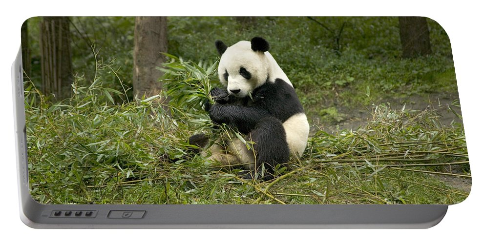 Giant Panda Portable Battery Charger featuring the photograph Giant Panda Eating Bamboo by Inga Spence