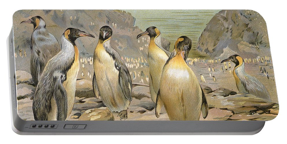 1900 Portable Battery Charger featuring the photograph Giant Penguins, C1900 by Granger