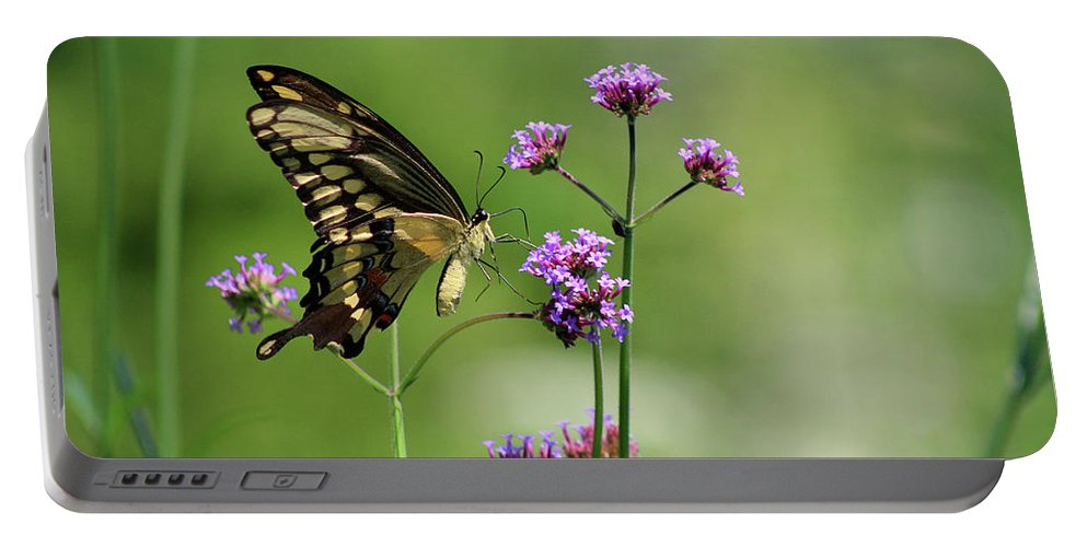 Animal Portable Battery Charger featuring the photograph Giant Swallowtail Butterfly On Verbena by Karen Adams