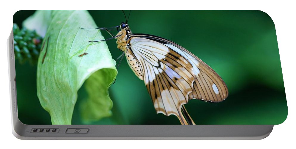 Giant Swallowtail Portable Battery Charger featuring the photograph Giant Swallowtail by Kristina Jones
