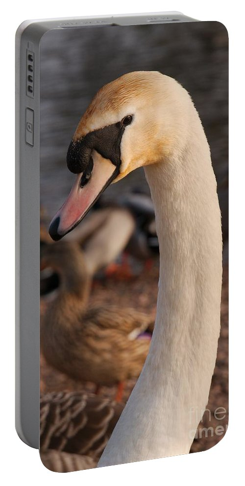 Chasewater Country Park Portable Battery Charger featuring the photograph Ginger Swan by Mickey At Rawshutterbug