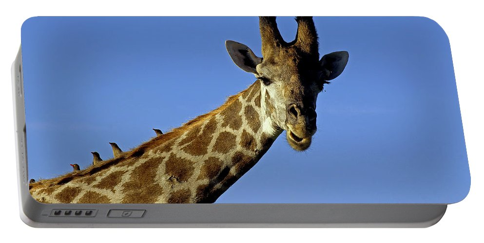 Wildlife Portable Battery Charger featuring the photograph Giraffe With Oxpeckers by Tony Murtagh