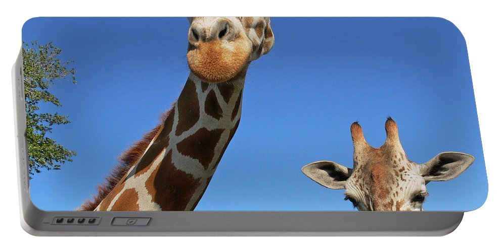 Giraffe Portable Battery Charger featuring the photograph Giraffes by Steven Sparks
