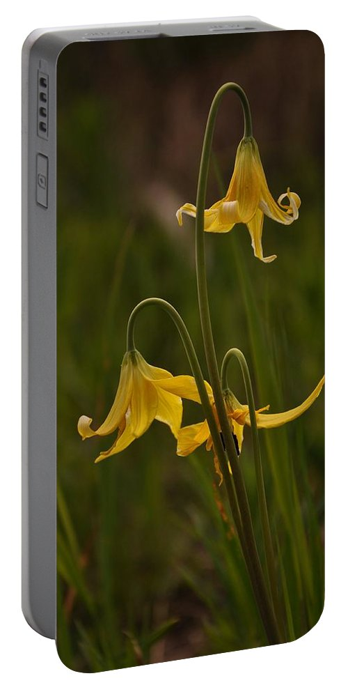 Yellowstone National Park Portable Battery Charger featuring the photograph Glacier Lilly by Frank Madia