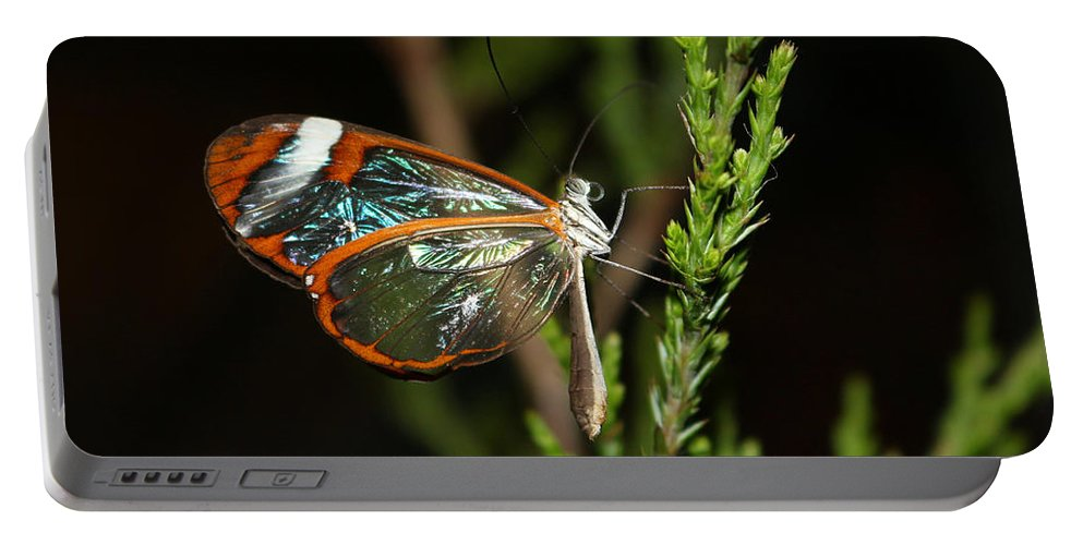 Butterfly Portable Battery Charger featuring the photograph Glasswinged Butterfly by Living Color Photography Lorraine Lynch