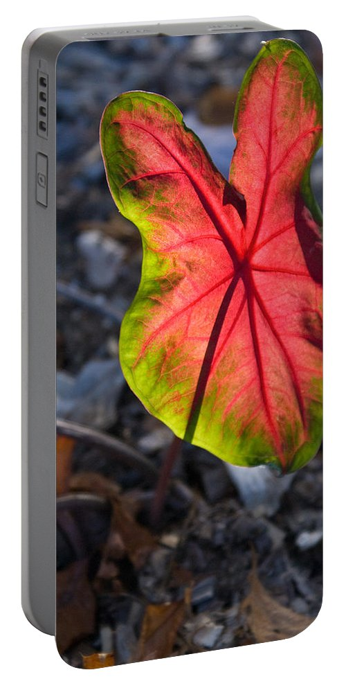Glowing Portable Battery Charger featuring the photograph Glowing Coladium Leaf by Douglas Barnett