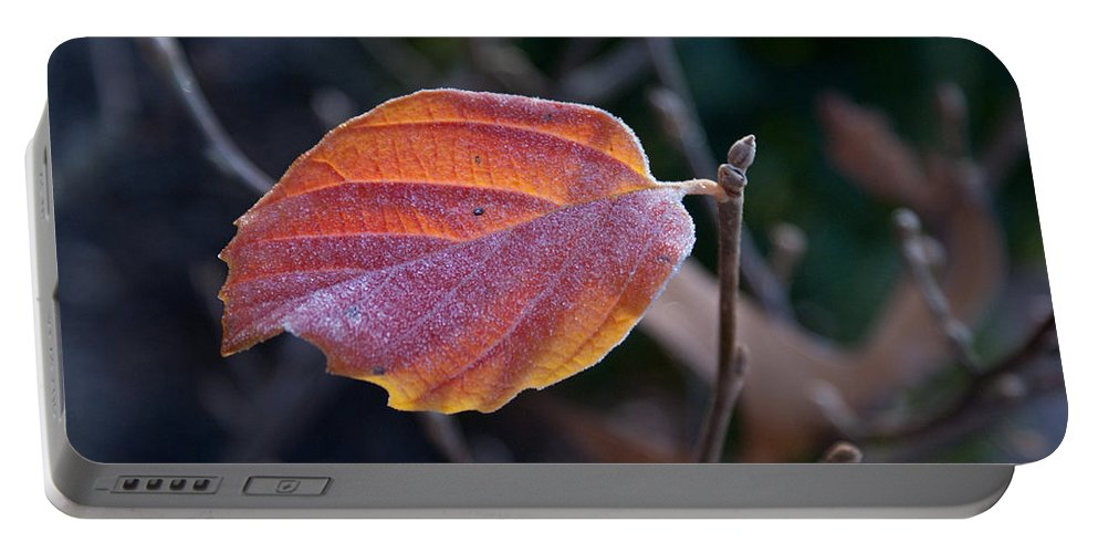 Leaf Portable Battery Charger featuring the photograph Glowing Leaf by Douglas Barnett