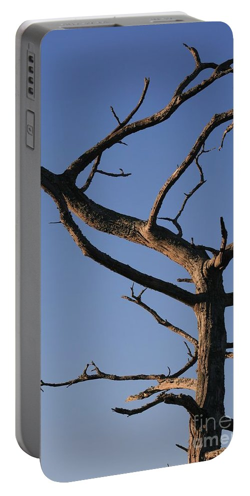 Tree Portable Battery Charger featuring the photograph Gnarly Tree by Nadine Rippelmeyer