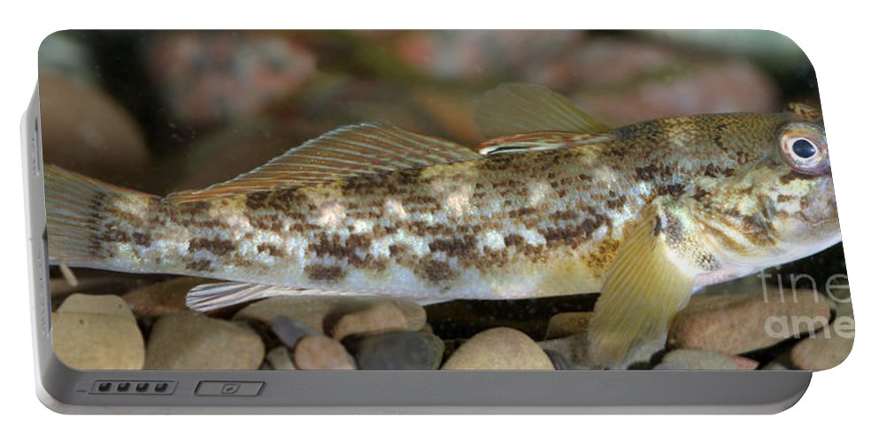 Fish Portable Battery Charger featuring the photograph Goby Fish by Ted Kinsman