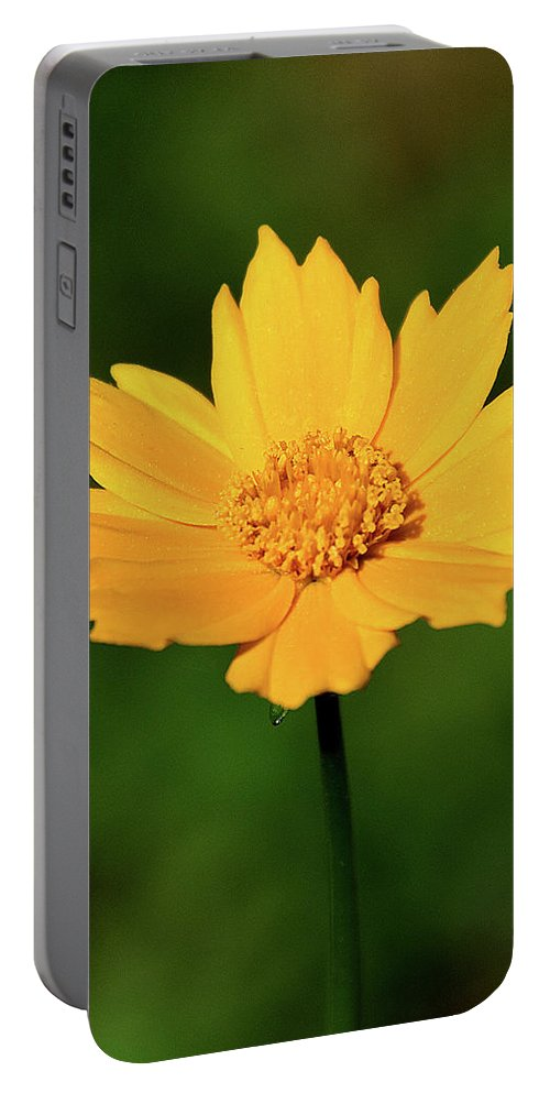 Ann Keisling Portable Battery Charger featuring the photograph Gold In The Garden by Ann Keisling
