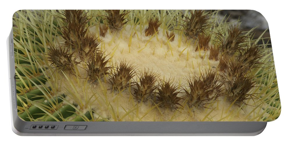 Landscape Portable Battery Charger featuring the photograph Golden Barrel Cactus by Michael Peychich