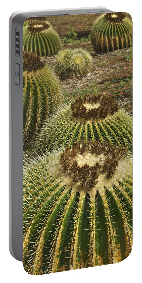 Landscape Portable Battery Charger featuring the photograph Golden Barrel by Michael Peychich