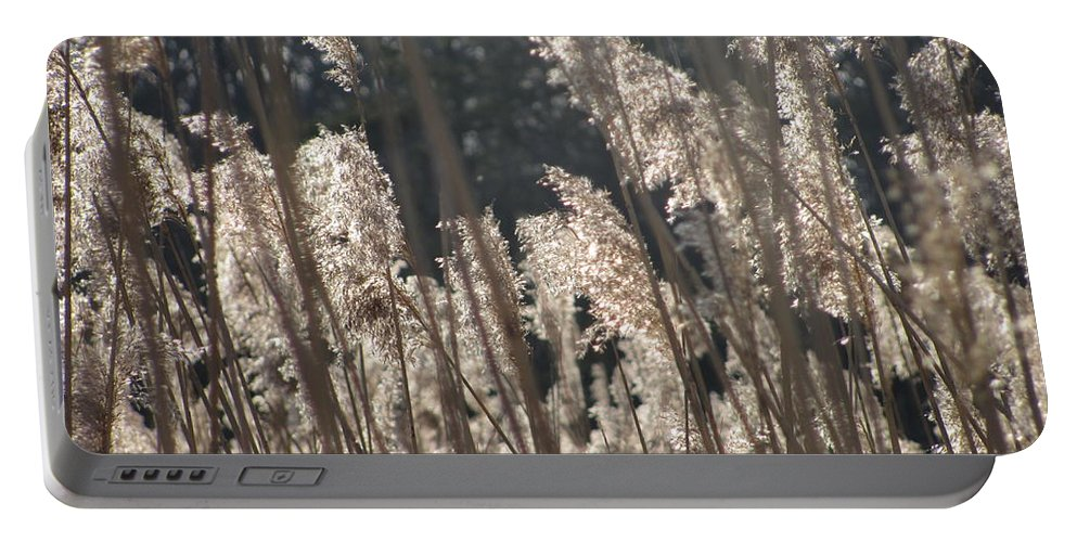 Golden Brown Grass Photographs Canvas Prints Reeds Nuetral Colors Landscape Winter Wetland Images Winter Marsh Photo Prints Maryland Cheasapeake Tributary Portable Battery Charger featuring the photograph Golden Brown by Joshua Bales