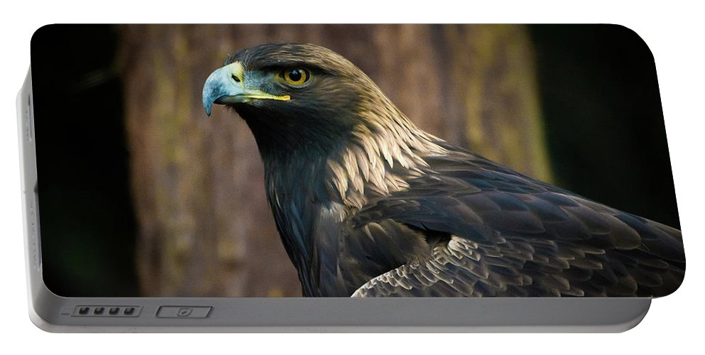 Eagle Portable Battery Charger featuring the photograph Golden Eagle 5 by Jason Brooks