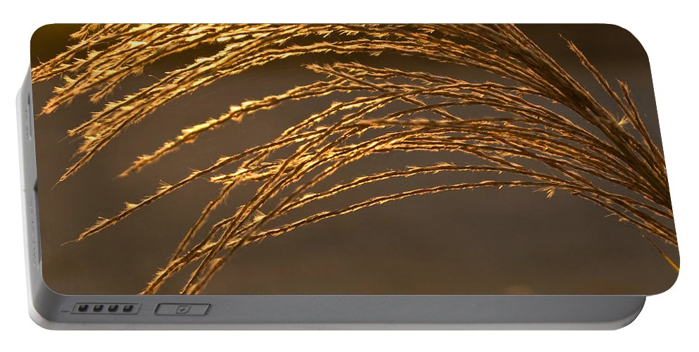Grass Portable Battery Charger featuring the photograph Golden Grass by Douglas Barnett