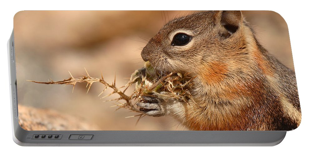 Squirrel Portable Battery Charger featuring the photograph Golden-mantled Ground Squirrel Eating Prickly Spine by Max Allen